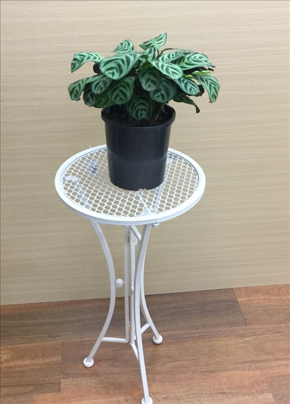 French Country Vintage Inspired Wrought Iron WHITE ROUND Side Table Plant Holder NEW