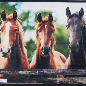 Patchwork Quilting Sewing Fabric Trio Horses Fence Panel 90x110cm New Material