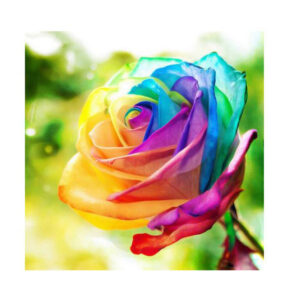 5D Diamond Painting Full Image Square Drills PAINTED ROSE 20x25cm New