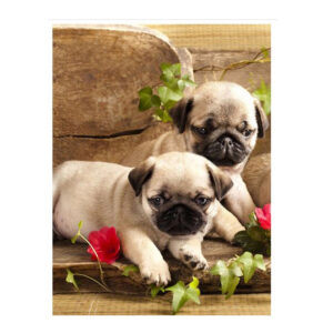 5D Diamond Painting Full Image Square Drills PUG PUPPIES 40x50cm New