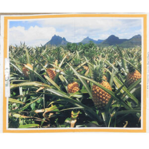 Patchwork Quilting Sewing Fabric PINEAPPLE FARM SUNNY COAST Panel 90x110cm New