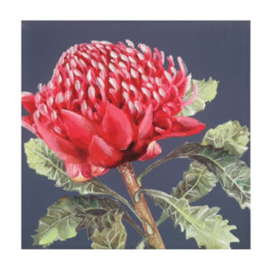 French Country Canvas Floral Print Australian WARATAH 2 50x50cm