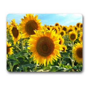 Gwen St Designs Kitchen Cork Backed Placemats AND Coasters Sunflowers Set 6