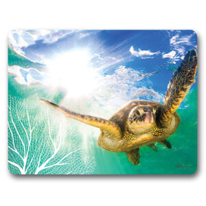 Kitchen Cork Backed Placemats AND Coasters Green Turtle Swimming Set 6
